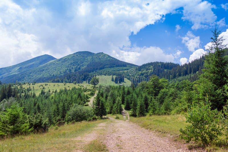 Landskap av Carpathians berg med vandringsledet, gran-träd och himmel arkivfoto