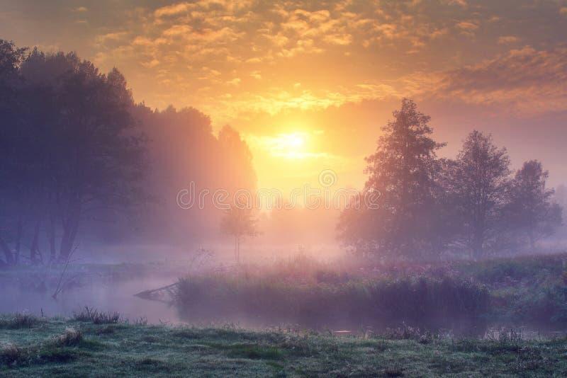 Landskap av den fantastiska sommarnaturen i tidig dimmig morgon på soluppgång Träd på flodbanken i mist på varm solljusbakgrund royaltyfria bilder