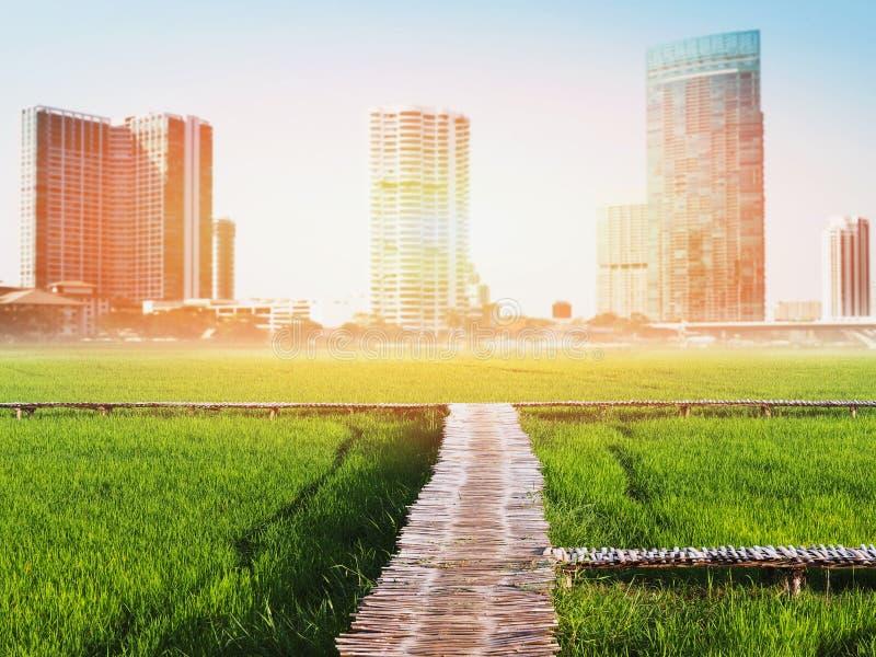 Landskap av den gröna risfältet över cityscapesuddighetsbakgrund arkivfoto