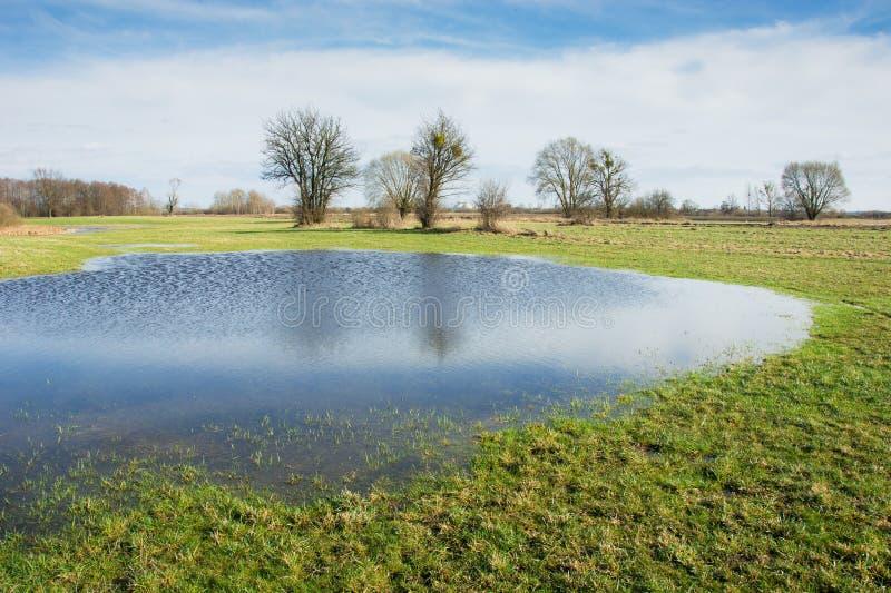 Landskap av den idylliska v?r?ngen, vatten efter regn, tr?d och solig himmel arkivfoto
