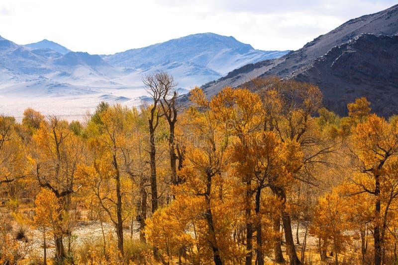 Landskap av den mongoliska utlöparen i höst Natur royaltyfria foton