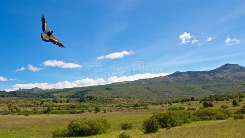 Landskap av den Patagonian stäppen i Bariloche, Argentina arkivbild