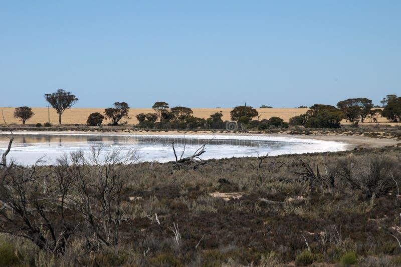 Landskap av den salta sjön med veteskörden i bakgrund royaltyfri fotografi