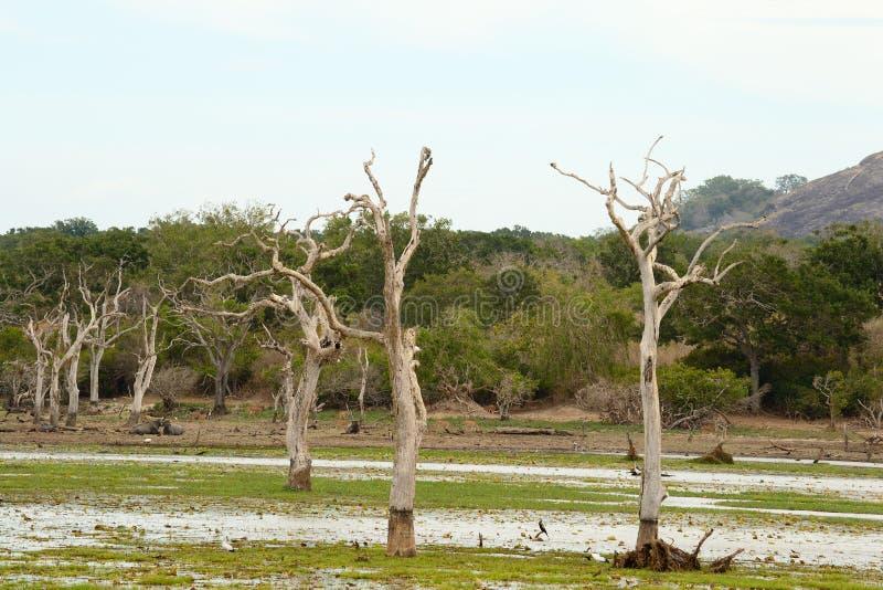 Landskap av den Yala nationalparken royaltyfria foton