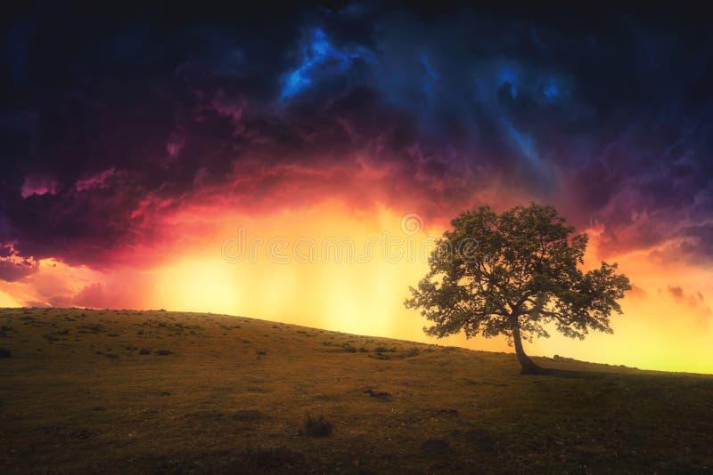 Landskap av det ensamma trädet på kullen med dramatisk himmel arkivfoton