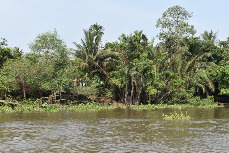 Landskap av det härliga landskapet på den Saigon floden i Ho Chi Minh City, Vietnam, Asien royaltyfria foton