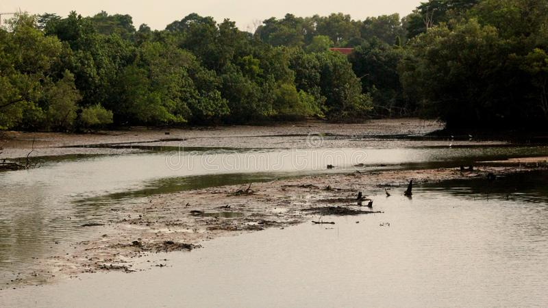 Landskap av djurliv i regnskogen i Singapore arkivbild