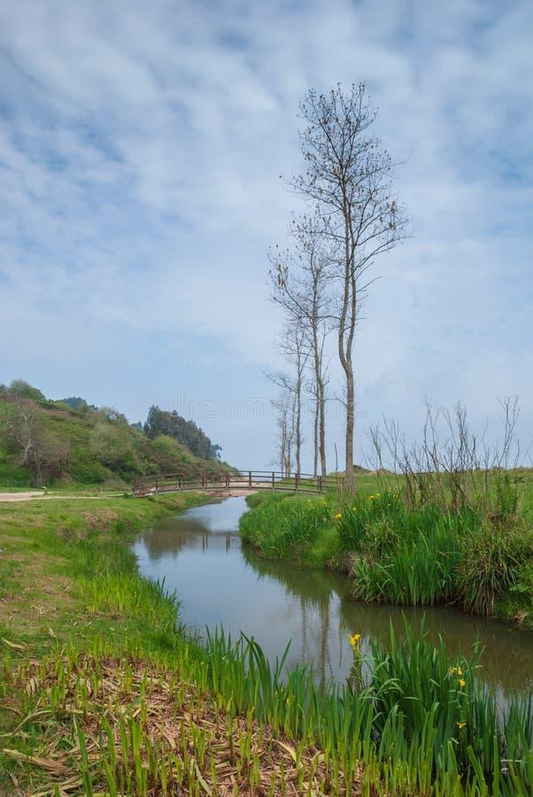 Landskap av en flodstrand med vegetation, en träbro och träd royaltyfria foton