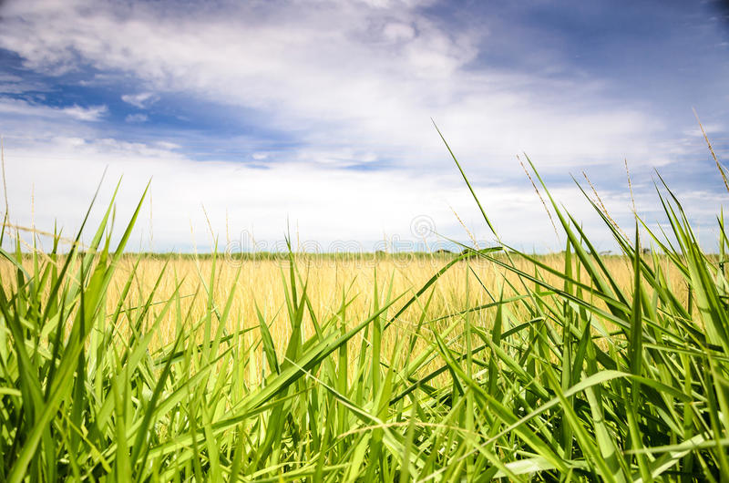 Landskap av ett öppet fält med grönt gräs arkivfoton
