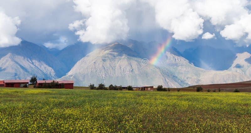Landskap av ett fält av gula blommor och en regnbåge med berg royaltyfri foto