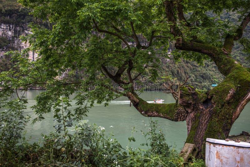 Landskap av ett forntida träd fotografering för bildbyråer