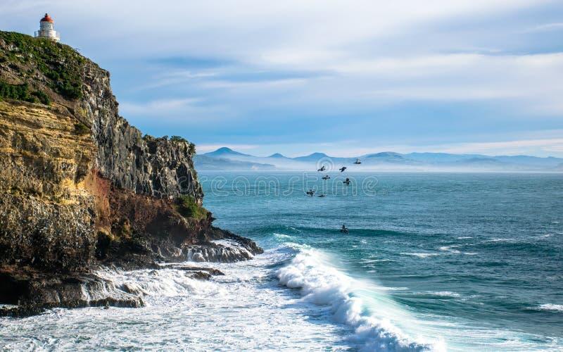 Landskap av fyren på de steniga klipporna av otagohalvön, samman med flygfåglar över havet fotografering för bildbyråer