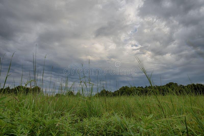 Landskap av gräs och trädet mot moln royaltyfri fotografi