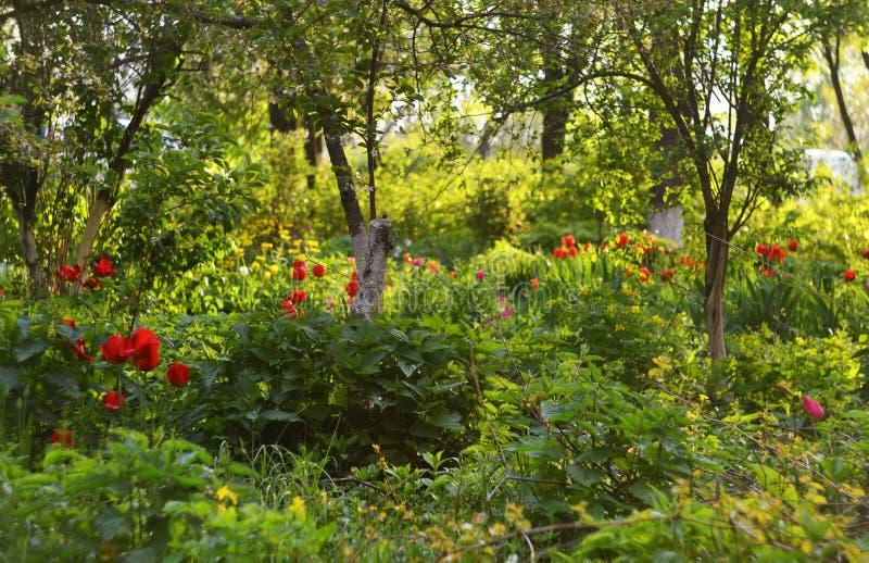 Landskap av grönska och tulpan royaltyfria foton