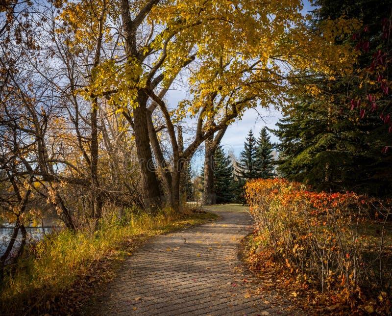 Landskap av härlig nedgånglövverk och träd med en gå bana royaltyfri foto