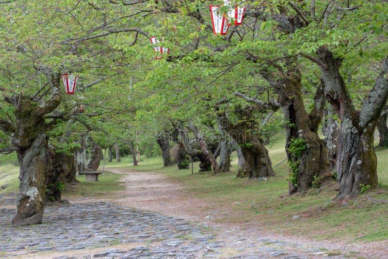 Landskap av härlig och färgrik trädgårds- japansk stil i summa royaltyfria foton