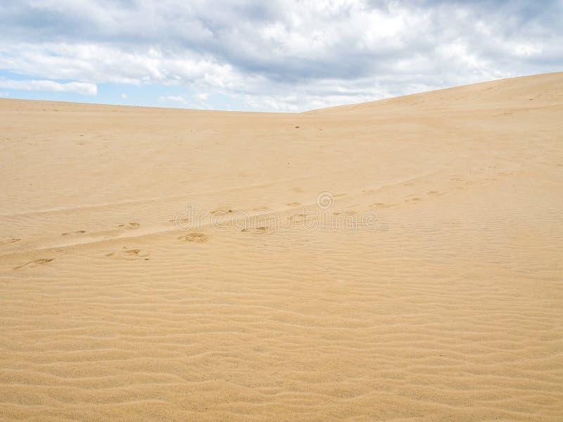Landskap av jockey` s Ridge State Park arkivfoton