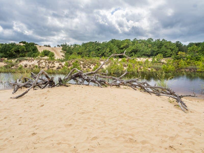 Landskap av jockey` s Ridge State Park fotografering för bildbyråer