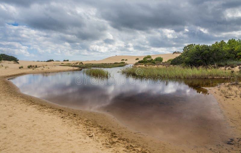 Landskap av jockey` s Ridge State Park royaltyfri fotografi