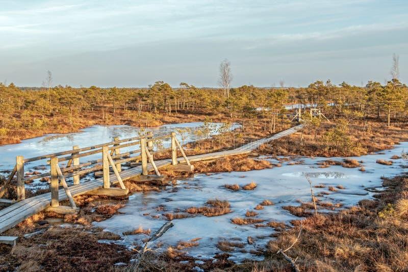 Landskap av Kemeri det stora träsket med hedlandflora på vintertorvmyren och dess reflexion i djupfrysta sjöar för träsk arkivbilder