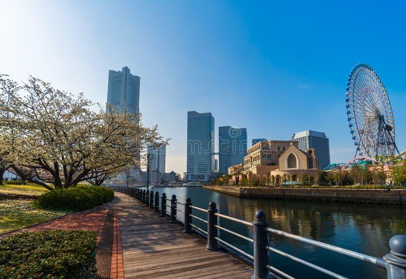 Landskap av Kishamichi promenad med den k?rsb?rsr?da blomningen i Minato Mirai, Yokohama, Japan royaltyfri foto