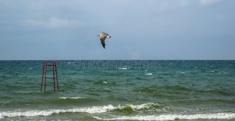 Landskap av kusten av Krimet royaltyfri fotografi