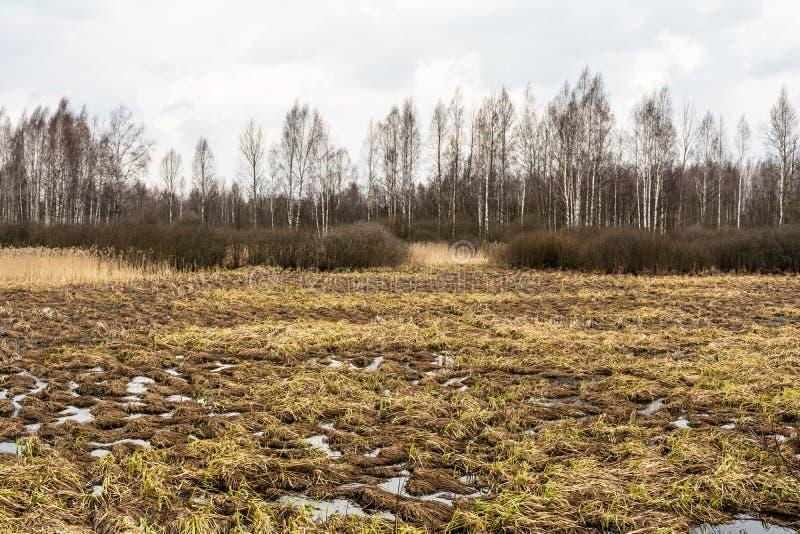 Landskap av marsklan med ett kalt träd för blad silhouetted mot en molnig blå himmel Döda träskgräs, vatten med reflexion & arkivbild