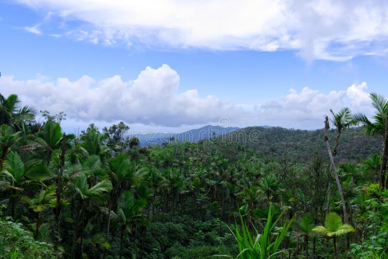 Landskap av rainforesten av Puerto Rico arkivfoton