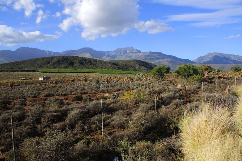 Landskap av rutt 62 med vinfält i bakgrund - Sydafrika royaltyfri foto