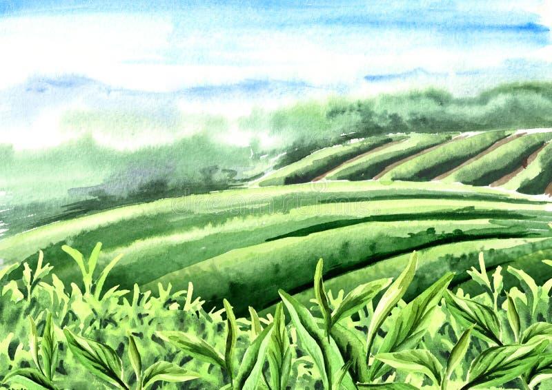Landskap av tekolonin Slut upp feshgräsplanteblad med morgonsignalljuset Hand dragen vattenfärgillustration royaltyfri illustrationer