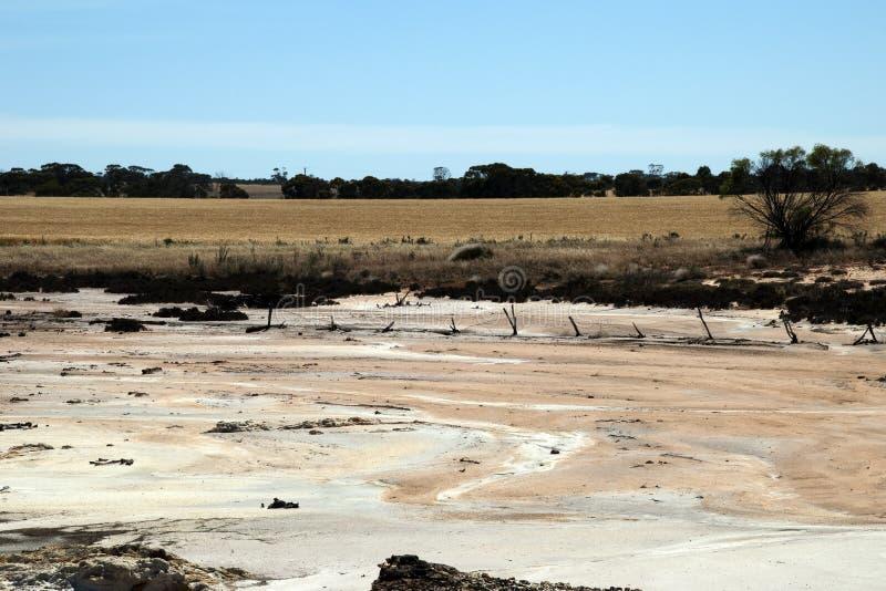 Landskap av torr salt säng med veteskörden i bakgrund arkivbilder