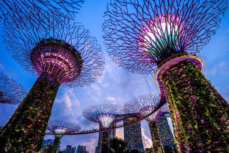 Landskap av trädgårdar vid fjärden i singapore arkivbilder