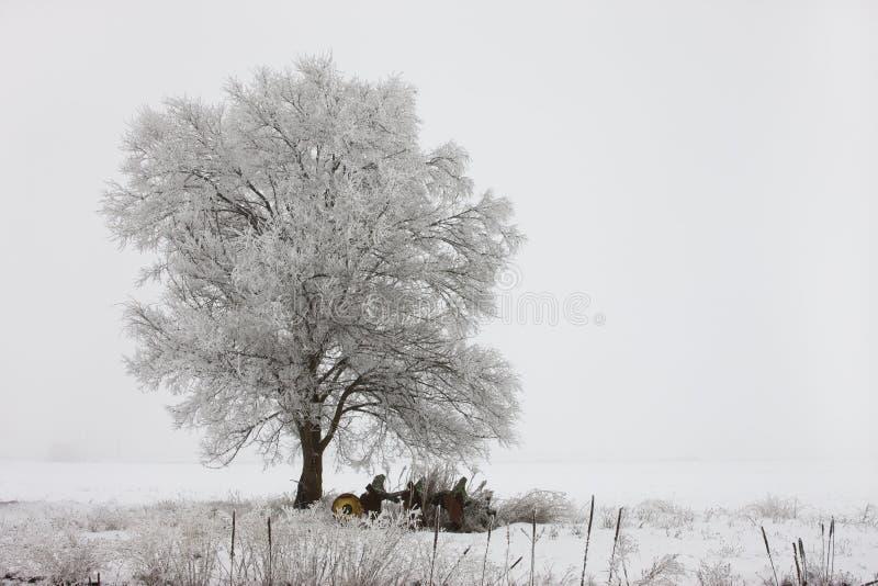 Landskap av treen som varvas i frost. royaltyfri foto