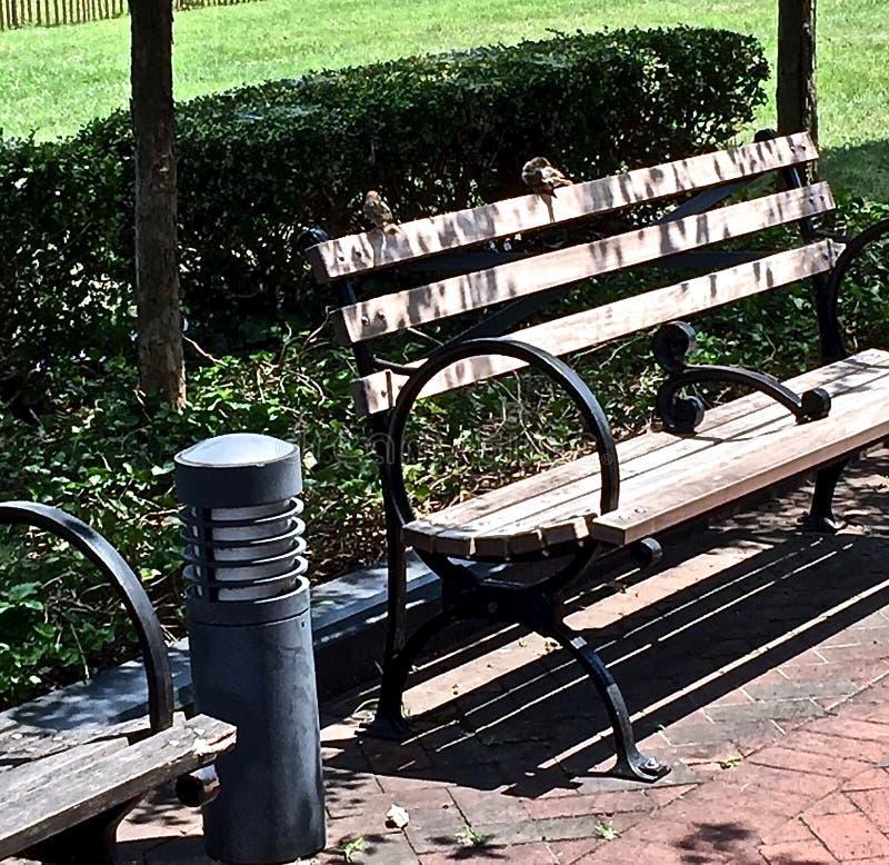 Landskap av två svalafåglar i Wilmington, Delaware royaltyfri foto