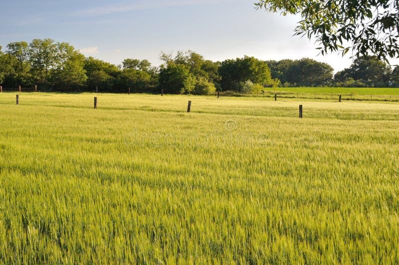 Landskap av vetefältet arkivfoto