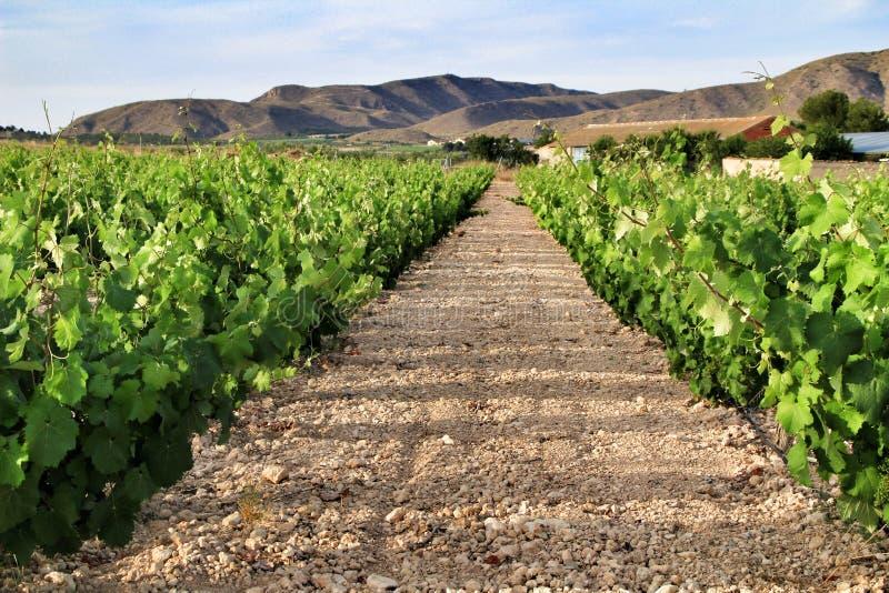 Landskap av vingårdar i Jumilla, Murcia landskap arkivfoto