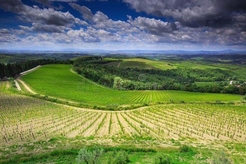 Landskap av vingårdar i Toscany, Italien arkivbilder