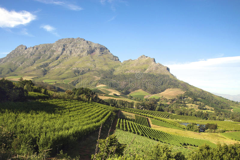 Landskap av vinodling i Sydafrika arkivbilder