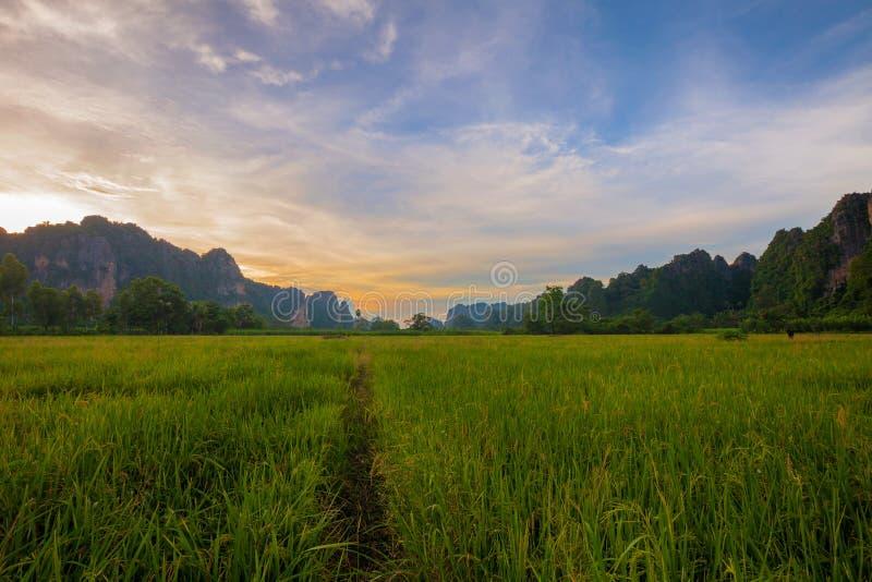 Landskap Berg med den gröna risfältet under solnedgång i Phits royaltyfri foto