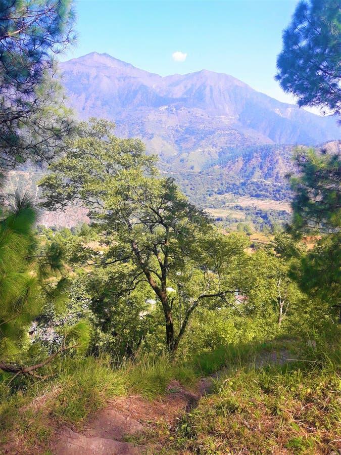 Landskap: En härlig grön natur med växter & träd arkivbild