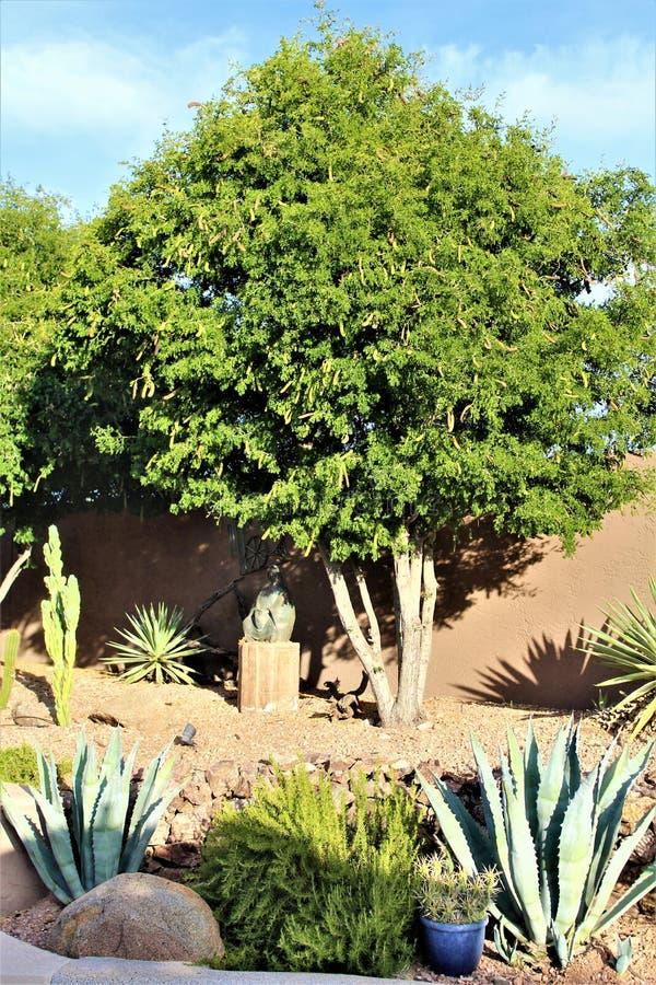 Landskap för Arizona ökenträdgård med en variation av kaktusvegetation royaltyfri foto