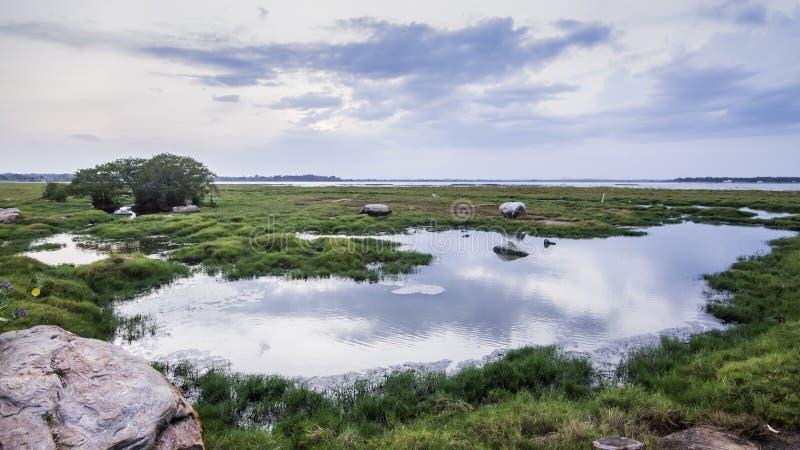 Landskap för Arugam fjärdlagun, Sri Lanka royaltyfri fotografi