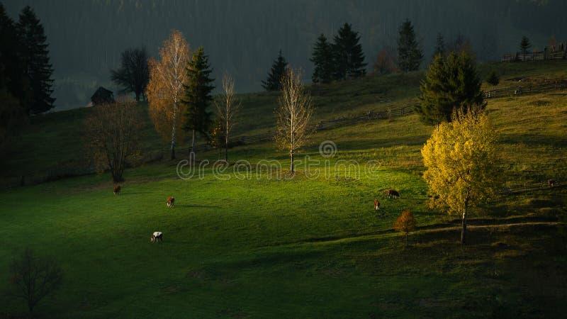 Landskap för Bucovina höstsoluppgång i Rumänien med mist och berg royaltyfria foton