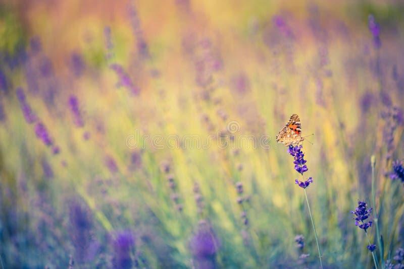 Landskap för Closeupvårnatur Färgrik äng under solljus på sommarbakgrund royaltyfri foto