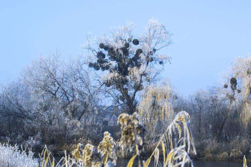 Landskap för dimmig vinter för morgon frostigt i natur royaltyfria foton