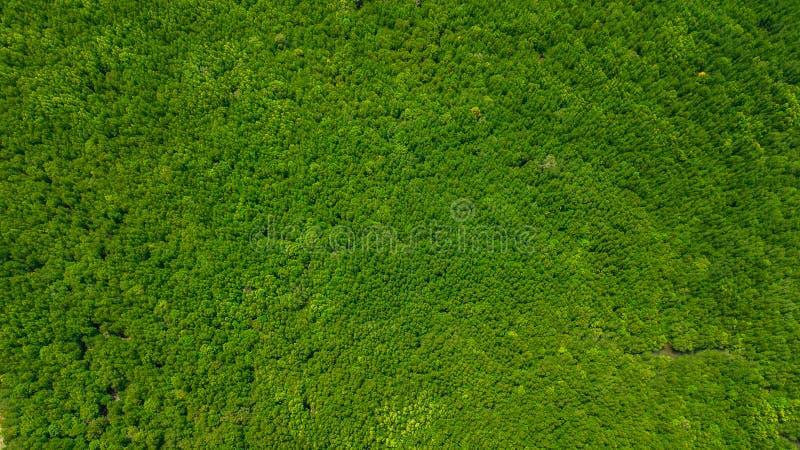 Landskap för flyg- sikt av trädet eller skogen, Krabi Thailand arkivfoto