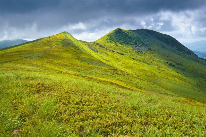 Landskap för gräs för Carpathian berg för Bieszczady nationalpark arkivbilder