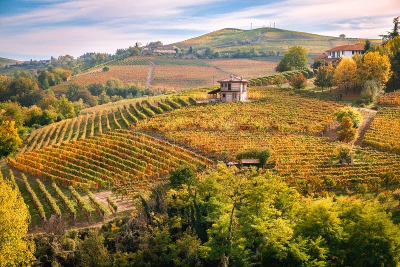 Landskap för höst för Langhe e Roero vingårdkullar royaltyfria foton
