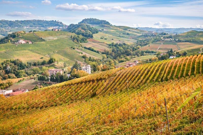 Landskap för höst för Langhe e Roero vingårdkullar royaltyfri fotografi