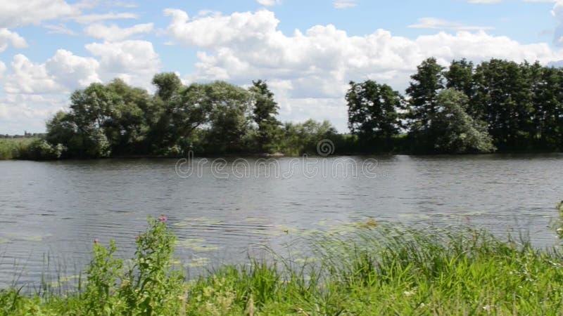 Landskap för Havel flod (den Brandenburg Tyskland) längs Havelradweg (den Havel cykelbanan) lager videofilmer